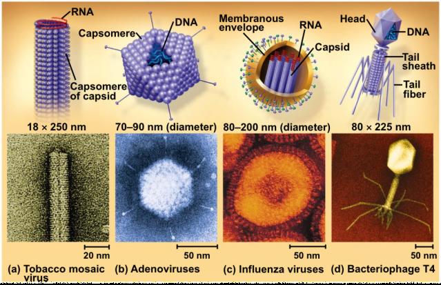nanoscales